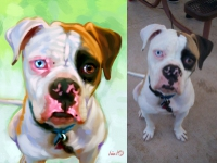 American Bulldog Portrait