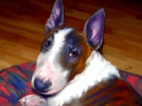 Bull Terrier Portrait