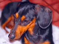 Dachshund Portrait