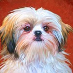 Shih Tzu dog art