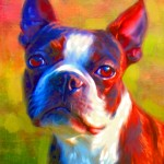 boston terrier pet portrait