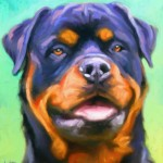 Rottweiler portrait
