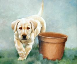 Click for larger dog portrait